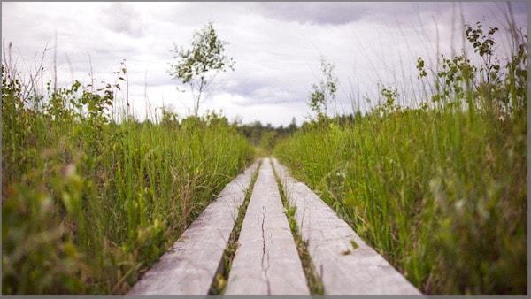Hölzerne Planken führen durch eine grüne Wiese