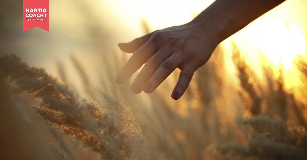Frauenhand streicht über ein Getreidefeld - Inspirationen Karen Hartig Coaching