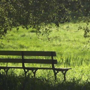 mein Tag, das Coaching: romantische Holzbank unter einem Baum mit Blick auf eine Wiese